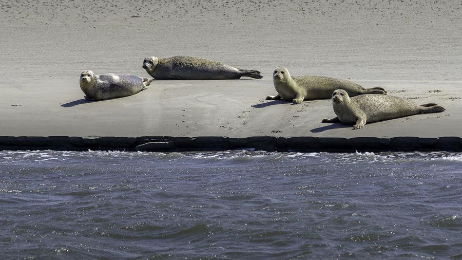 seals enjoying