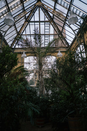 Hortus Botanicus Plant Greenhouse Architecture Growth Built Structure Tree Nature No People Day Plant Nursery Low Angle View Indoors  Botany Ceiling Glass - Material Green Color Roof Transparent Skylight
