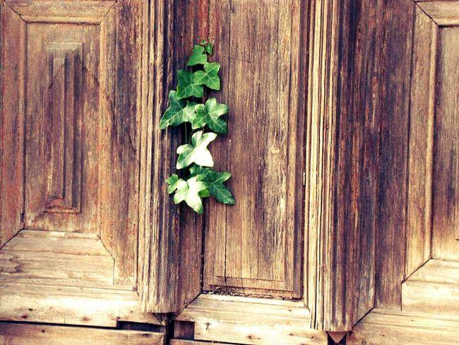 Photography Lostplaces Flowers Door Getting Inspired Hanging Tree Bernburg City