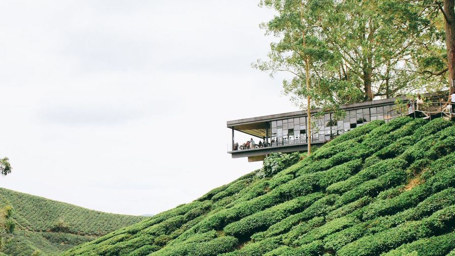 coffee on the hill Cameron Highlands Malaysia Cameronhighlands EyeEm Best Shots Eyeem Market EyeEm Selects EyeEm Best Edits Boh Tea Plantation Tea Plantation  Plantation Hill Coffee Shop Coffee Shop Scene Tree Sky Architecture Green Color