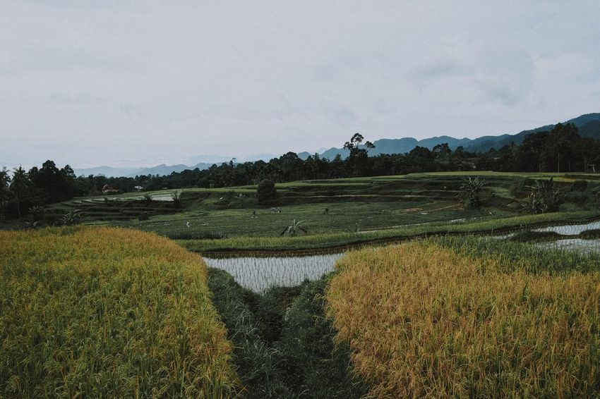 Lintau, West Sumatra 2018 Sky Scenics - Nature Plant Tranquility Tranquil Scene Water Nature Landscape Beauty In Nature Growth Environment Tree No People Field Land Rural Scene Green Color Lake Agriculture Outdoors