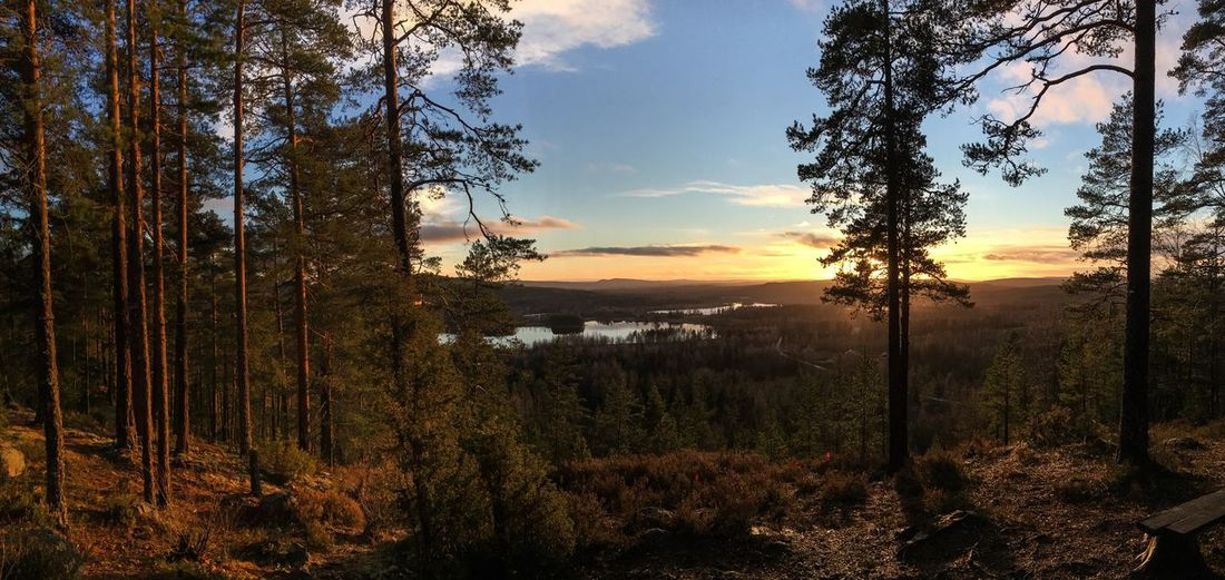 Panoramic view over my home village. 😊 EyeEm Nature Lover Nature Beautiful Sweden Sunset Photography World Open Edit Europe Eyem Best Shots Panorama OpenEdit Hello World Eyemphotography EyeEm Gallery