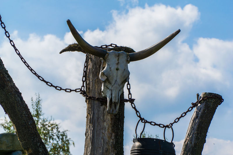 Low angle view of hunting trophy on wooden post against sky