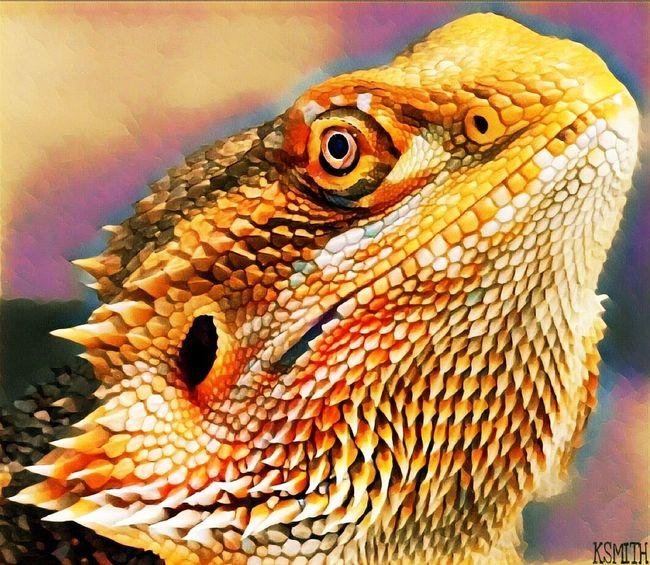 KSMITH22 Edited Nature Lizard Animal Wildlife Reptile