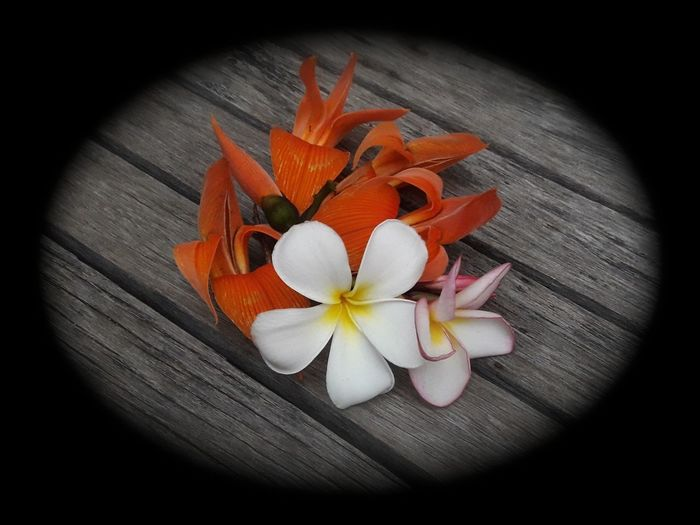 Beauty In Nature Close-up Day Flower Flower Head Fragility Frangipani Freshness Illustrated White Plumeria Flower As Background Nature No People Spa Flower Sweet Smelling Flowers