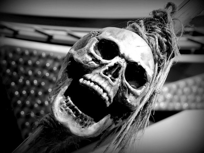 Thrill seeker. No People Extreme Close Up Skull Skull Face Thrill Thrilling Thrillseeker Scary Different Differ