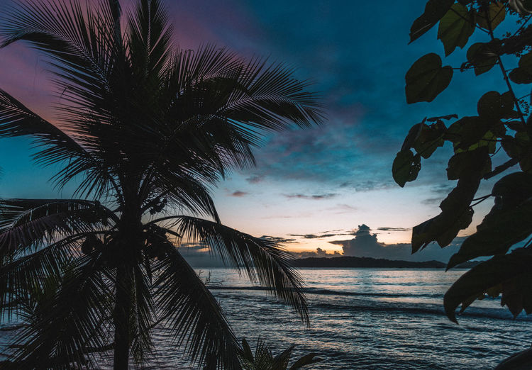 Low angle view of silhouette palm trees at beach against sky