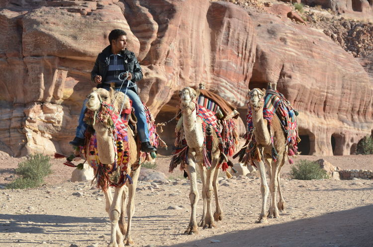 Petra Petra Jordan Petra, Jordan Travel Traveling Camel Camel Riding Desert Domestic Animals Real People Sand Travel Destinations Vacation