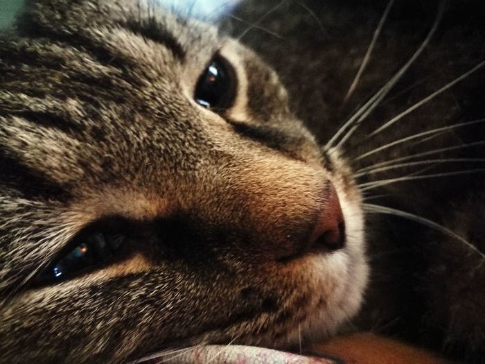 Pets One Animal Domestic Animals Animal Themes Close-up Animal Head  Pet Portraits Mammal Portrait Animal Whisker No People Animal Nose Lying Down Friendship Outdoors Day Pet Portrais