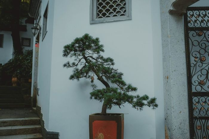 Taking Photos EyeEm Gallery OpenEdit Architecture China Chinatown Chinese