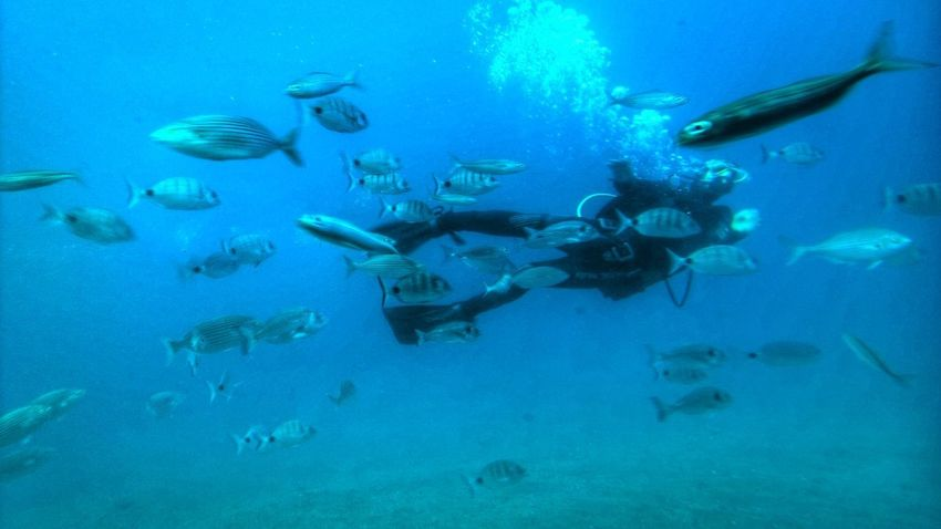 Be. Ready. 😉😊😊✋ Underwater Fish UnderSea Scuba Diving Large Group Of Animals Sea Life Swimming People Adventure Adults Only Blue Sea One Person Adult Animal Themes Only Women Day Nature EyeEmNewHere Low Angle View Travel Destinations Outdoors Young Adult
