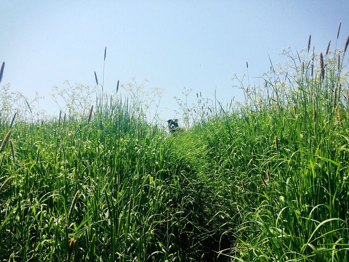 """""""Are you coming?"""" Grassy Grass Day Sky Long Grass Green Up Shot Hill Plant Animal Dog High Angle View Blue Tranquil Scene Landscape Nature Beauty In Nature"""