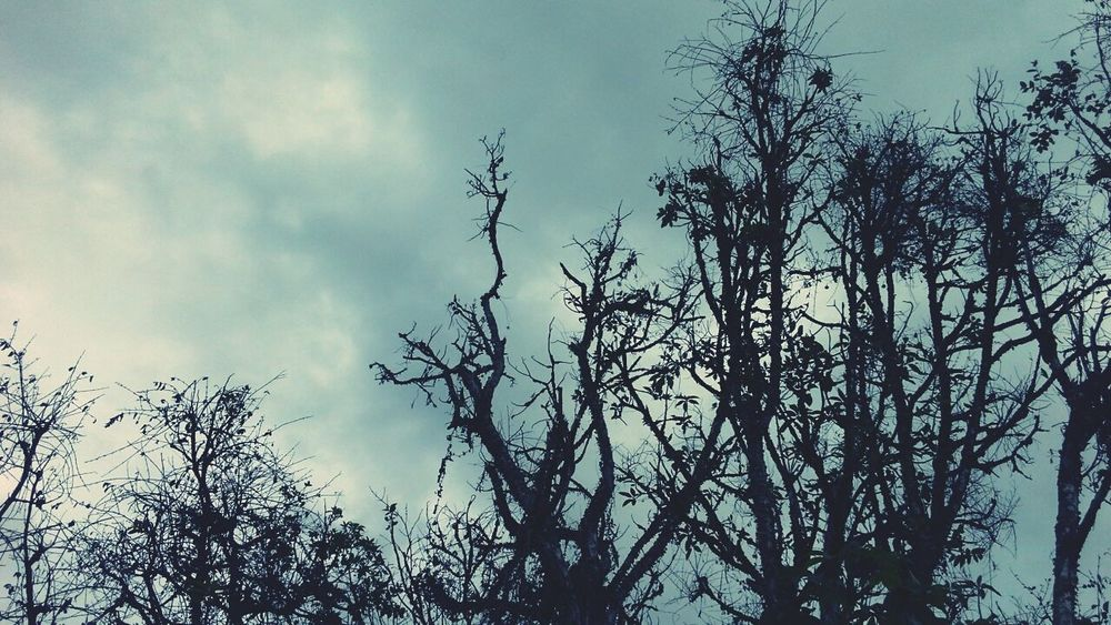 Trees Fortheloveofblackandwhite Eyemnaturelover