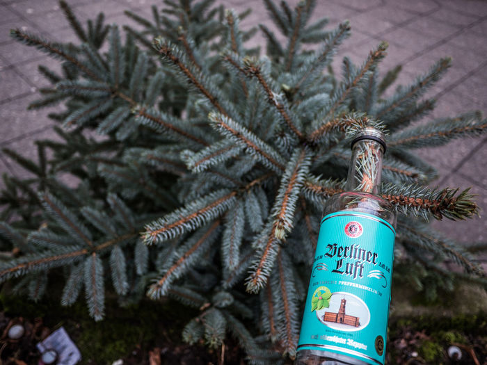 Berliner Luft Christmas German Liquor Liquor New To EyeEm Tree Alcohol Branch Christmas Decoration christmas tree Cold Temperature Decoration Fir Tree Winter
