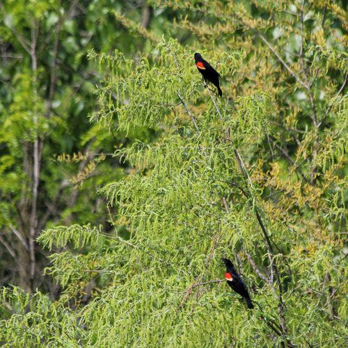 Canon EOS 60D Animal Wildlife Bird Animals In The Wild Perching Nature