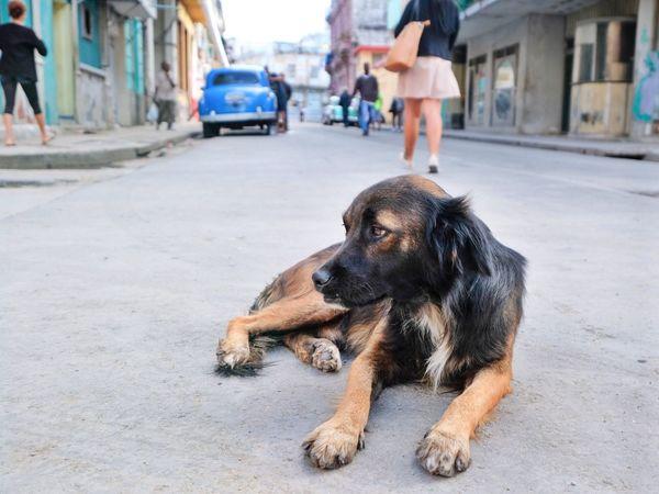 Street dog Cuba Havana Dog Pets One Animal Incidental People Street Animal Themes Domestic Animals Outdoors Lying Down