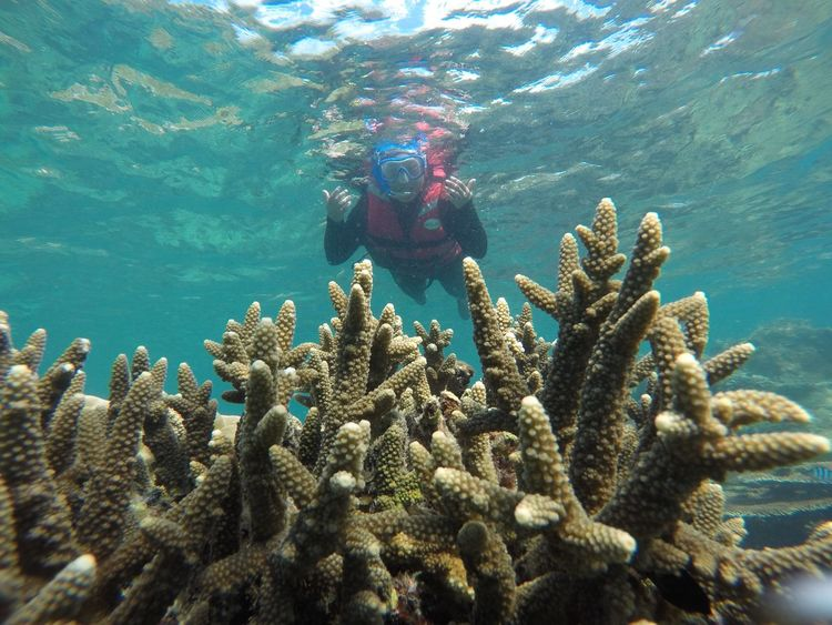 Coral view Aqualung - Diving Equipment Snorkeling Diving Into Water Diving Equipment Diving Suit Diving Flipper Aquatic Sport At The Bottom Of Wetsuit Underwater Diving Diving Scuba Mask Soft Coral Ocean Floor Whale Shark Scuba Diver Swimming Goggles School Of Fish Sunken