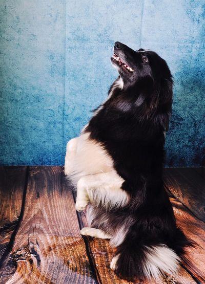 Close-up of dog sitting