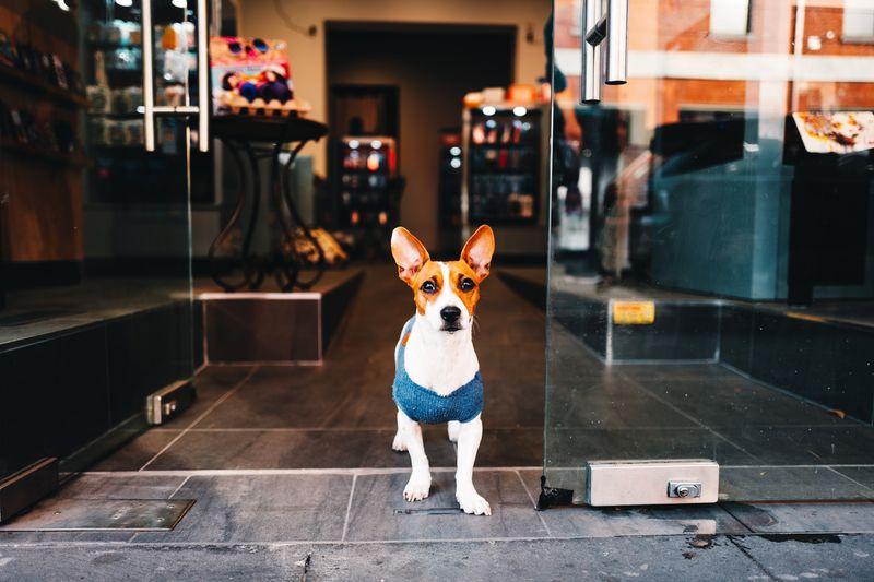 Portrait of dog standing on floor at entrance