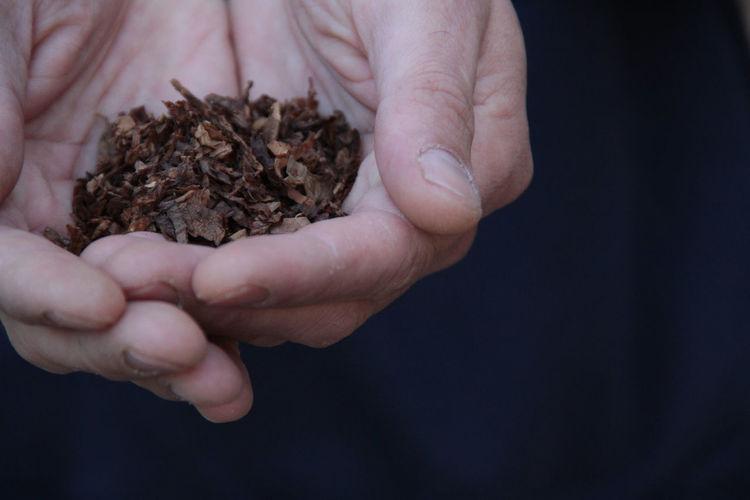 @LucianaLopezRec LucianaLopezRec Plant Sacred Plant Tabacco Pipes Vintage Style Ancestral Andino Chaman Close-up Day Hand Indoors  Madera Antigua Madera Vieja Planta Sagrada Shaman Shamanism Tabacco  Tabaco Tabaco Sagrado
