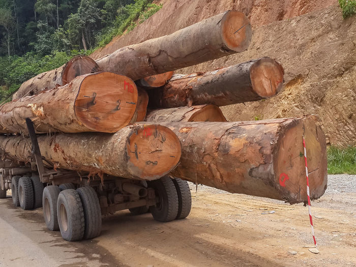 Huge tree trunks loaded onto logging truck in the rain forest of Gabon, Central Africa. Logging Lorry Transport Transportation Tree Tree Trunk Trees Africa Day Environment Environmental Conservation Environmental Damage Environmental Issues Forest Gabon Illegal Industry Log No People Outdoors Pile Stack Tire Transportation Trunk