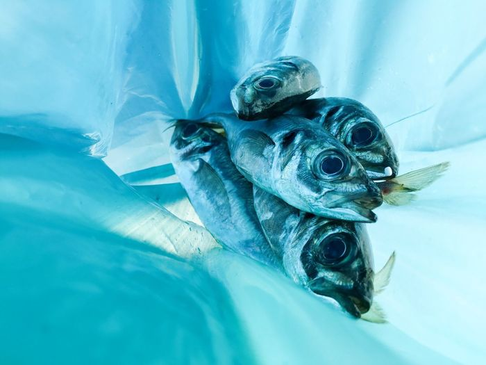Close-Up Of Fish In Plastic Bag