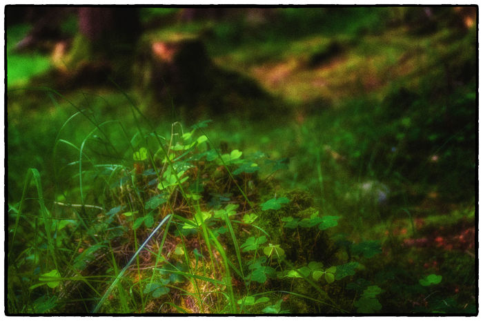 Beauty In Nature Close-up Cruagh Woods Day Dublin Dublin Mountains Field Focus On Foreground Grass Grassy Green Green Color Growing Growth Ireland Irelandinspires Ireland🍀 Nature No People Outdoors Plant Scenics Selective Focus Tranquil Scene Tranquility