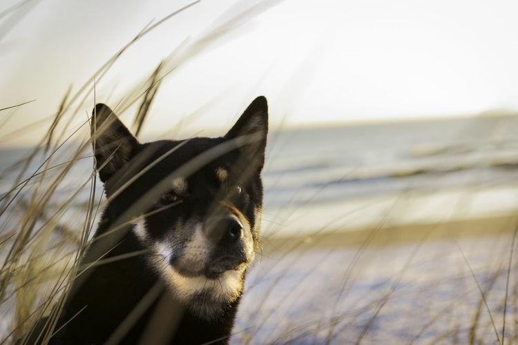 Close-up of dog seen through grass