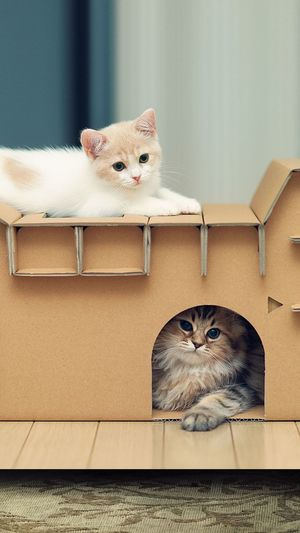Close-up of kittens sitting on cardboard box