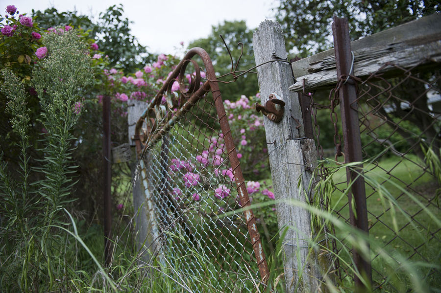 Abandoned Architecture Beauty In Nature Built Structure Creepy Day Fence Flower Freshness Gate Green Color Growth Melancholy Nature No People Outdoors Overgrown Pink Color Plant Railing Rickety Tranquility Tree Wood - Material