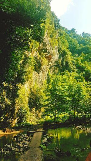 HelloEyeEm Hello World EyeEm Best Shots EyeEmNewHere Popular Photos Relaxing Nature #EyeEm Green Color Reading Like Tree Water Sunlight Sky