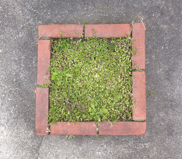 Brick City Concrete Contrast EyeEmNewHere Fragility Garden Grass Growth Leaf Limited Nature No People Plant Simplicity Square Still Life Strong