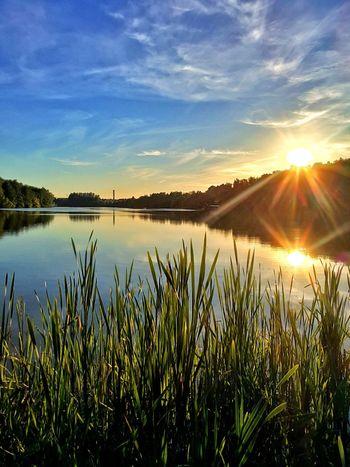 Water Flower Sunset Rural Scene Lake Sunlight Summer Field Sky Grass