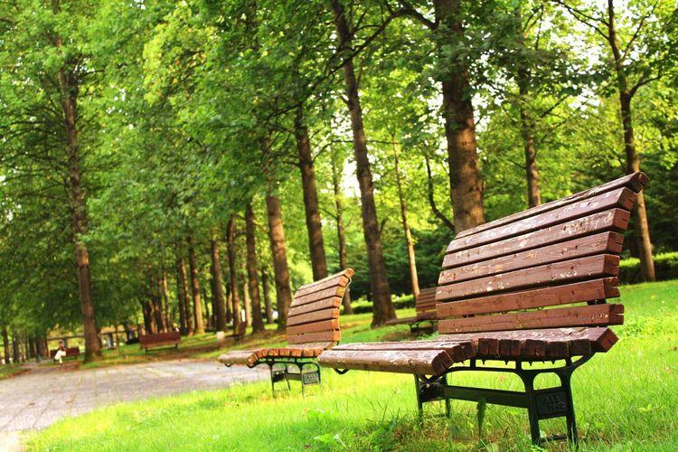 公園 ベンチ Tree