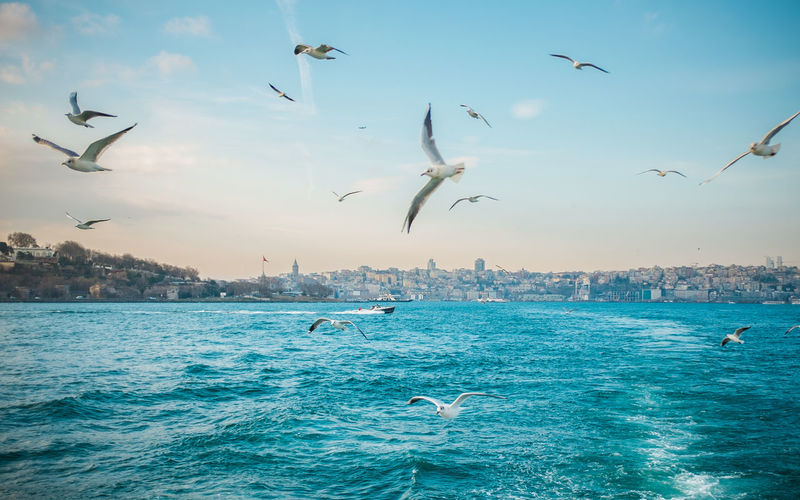 Bosporus view. Animal Themes Beauty In Nature Bird Bosphorus Bosphorus, Istanbul Cloud - Sky Day Flying Istanbul Large Group Of Animals Mid-air Motion Nature No People Outdoors Representing Seagull Seagulls Seagulls And Sea Seascape Sky Spread Wings Togetherness Wanderlust Water