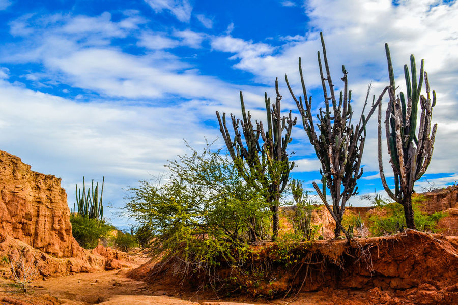 Tatacoa´s Desert. Beauty In Nature Blue Cloud Cloud - Sky Desert Desert Beauty Desert Landscape Deserts Around The World Growth Landscape Nature No People Non-urban Scene Outdoors Plant Rock Rock - Object Rock Formation Scenics Sky Tranquil Scene Tranquility