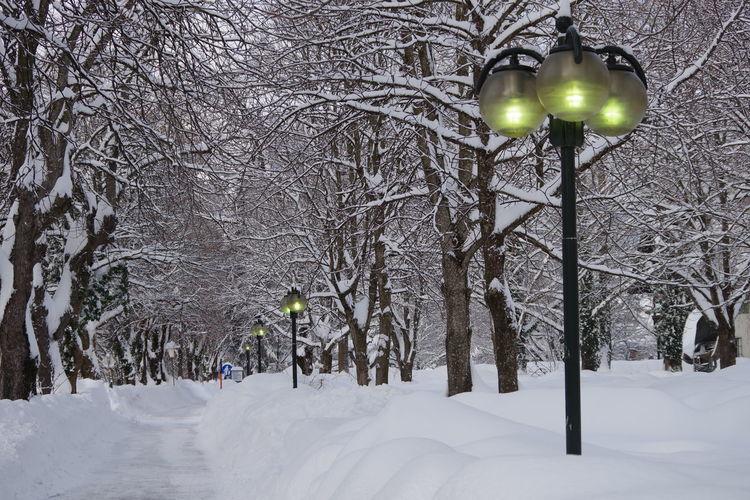 Street light on snow covered land