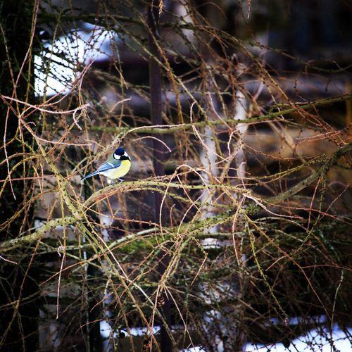 Bird Winter Nature Plant Naturephotography Composition Birdphotography Bird Tree Branch Close-up