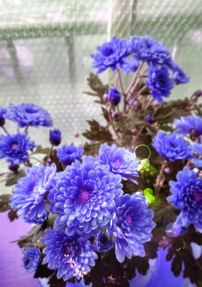 Magical Flowers Flower Purple Nature Fragility Freshness Beauty In Nature Plant Growth Flower Head Close-up Outdoors
