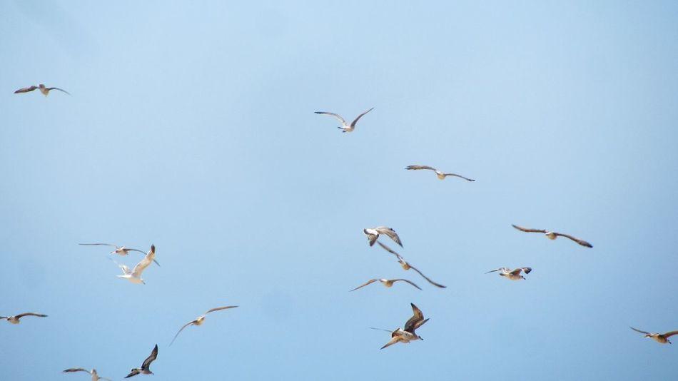 Flying Seagulls.. Birds Of EyeEm  Seagulls And Sea EyeEm Nature Lover Flying Seagull Taking Pictures Photowalk Taking Photos Walking Around