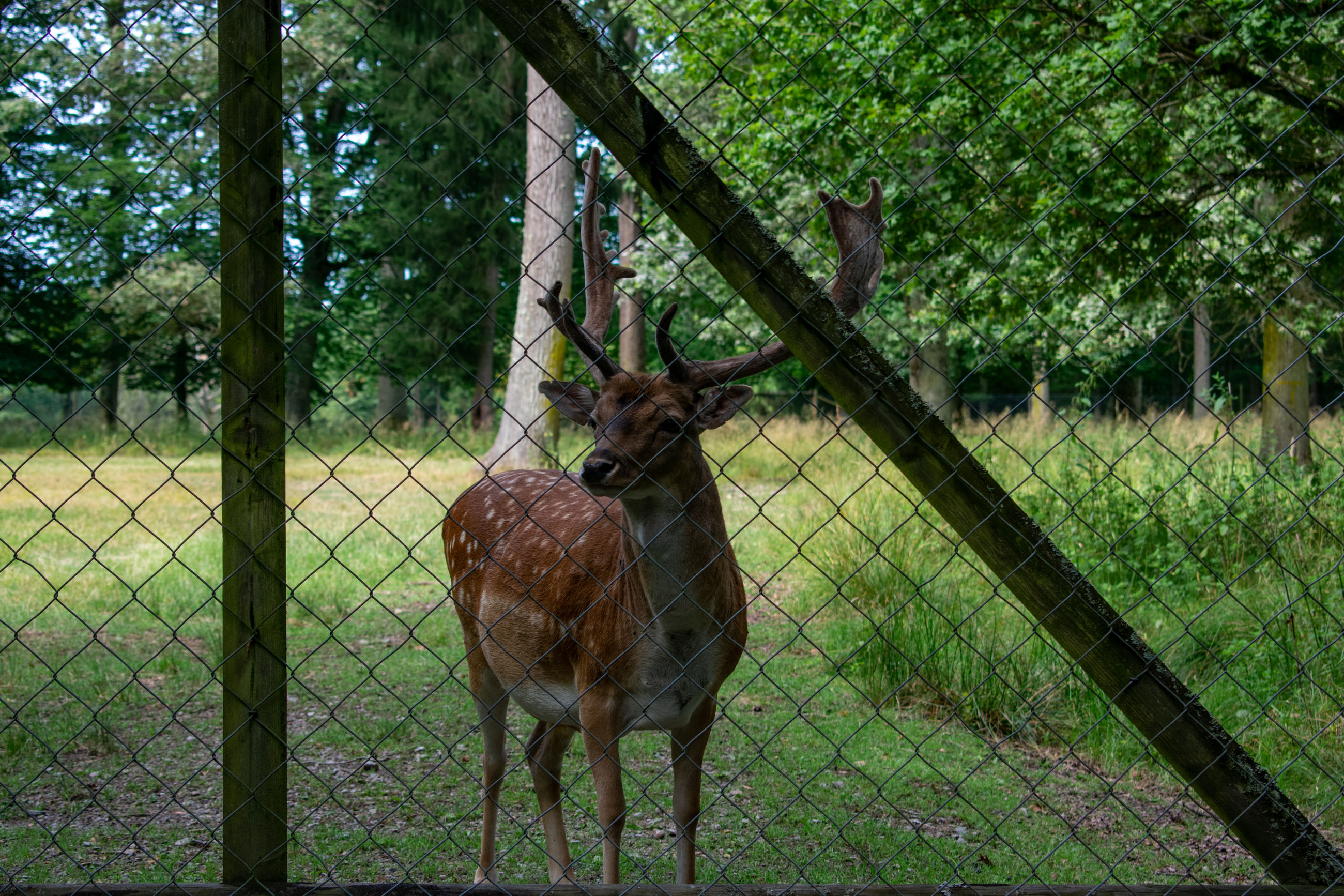 mammal, plant, animal, animal themes, tree, vertebrate, land, domestic animals, animal wildlife, field, nature, fence, barrier, boundary, group of animals, grass, trunk, day, deer, standing, no people, outdoors, herbivorous, zoo