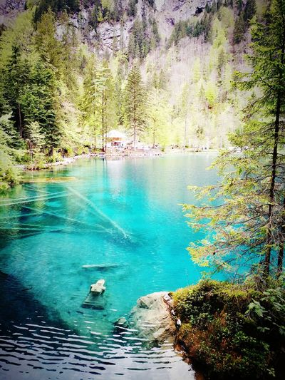 Blausee Switzerlandwonderland Water Nature Beauty In Nature Outdoors The Great Outdoors - 2017 EyeEm Awards The Great Outdoors - 2017 EyeEm Awards