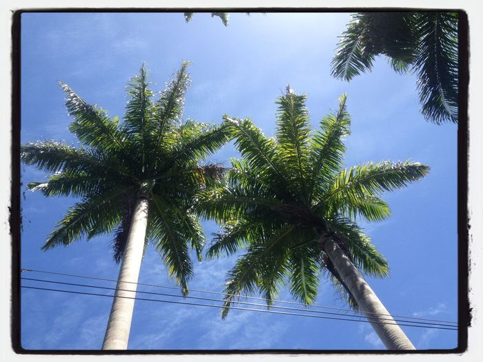 Look Up And Thrive Palm Trees