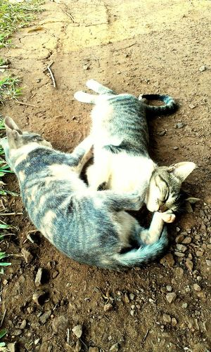 Mimosinhos. Love ♥ Cats Sun ☀