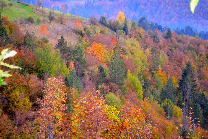 Autumn collors Autumn Autumn Collection Autumn Colors Beauty In Nature Close-up Day Holi Horizontal Multi Colored Nature No People Outdoors