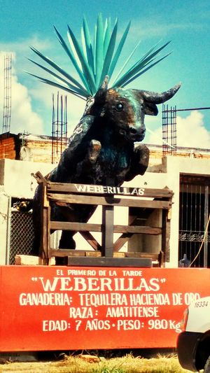 Toros Tequila, Jalisco Bulls