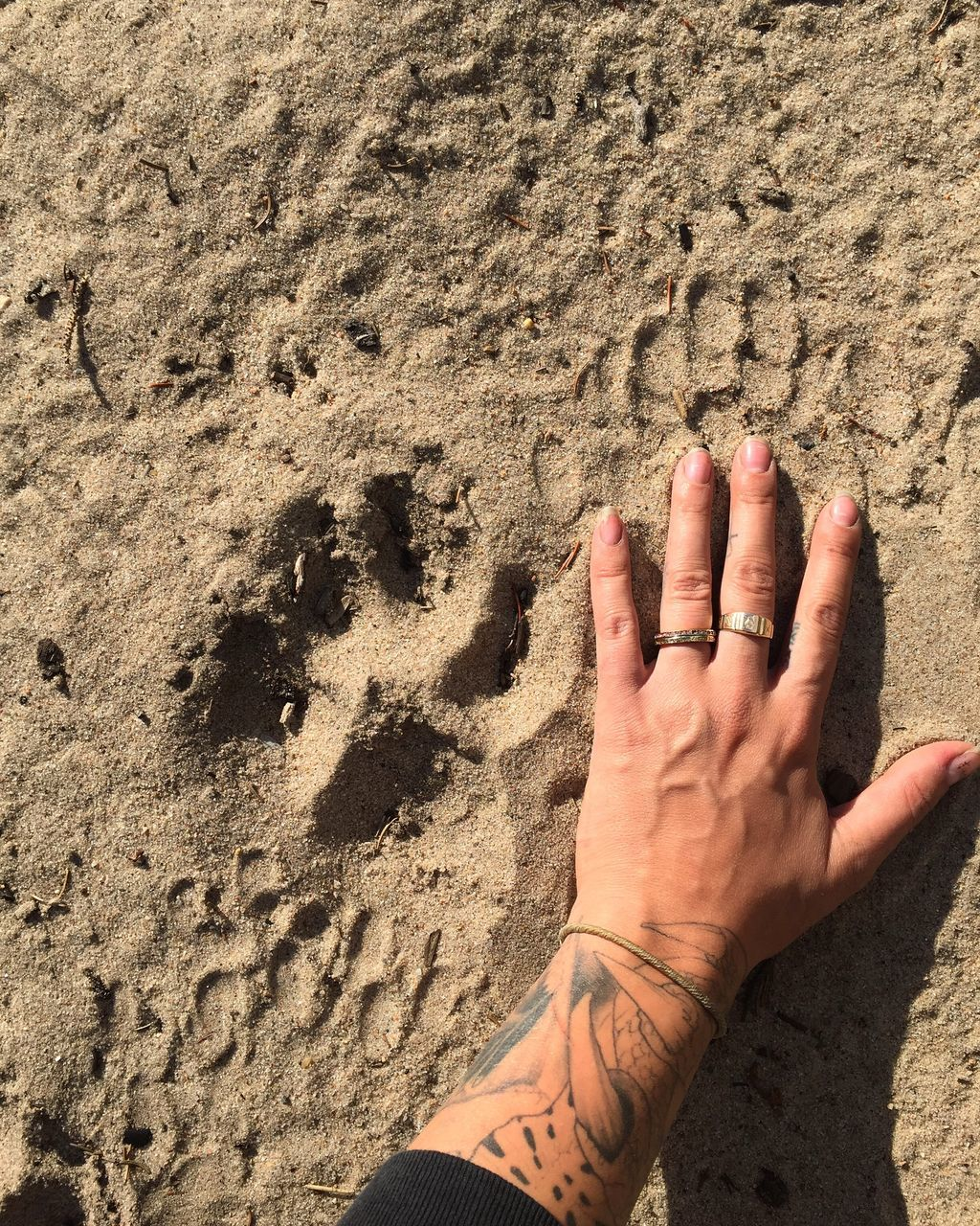 Cropped Hand Of Tattooed Woman Touching Sand At Beach