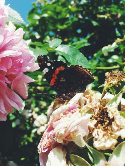 Colorful Butterfly Flowers Roses Vscocam VSCO Nature EyeEm Nature Lover