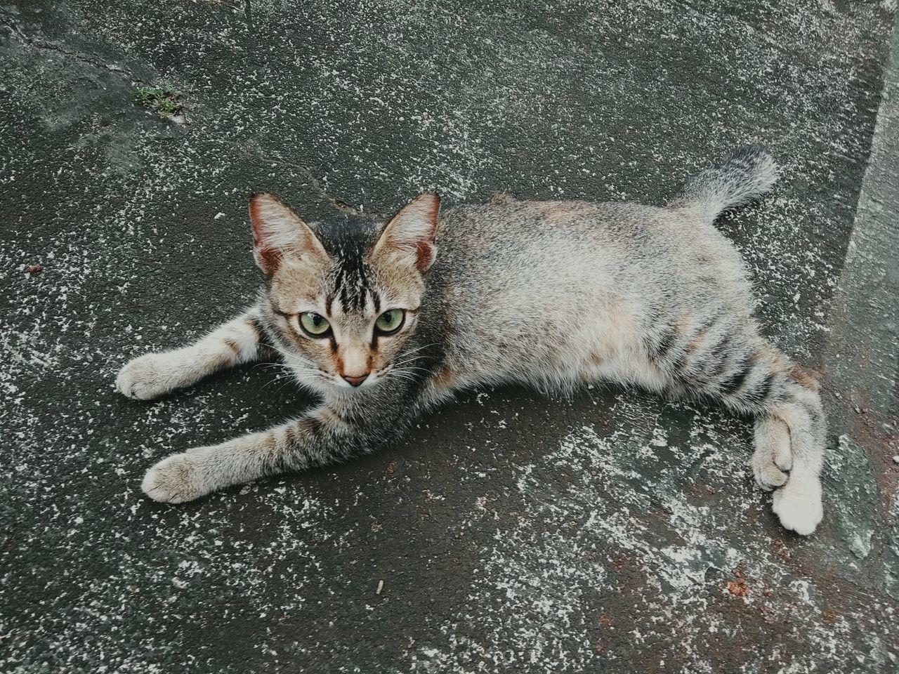 HIGH ANGLE PORTRAIT OF CAT LYING ON FLOOR