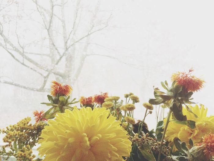Blumenstrauß Tadaa Community Schnee Erster Schnee